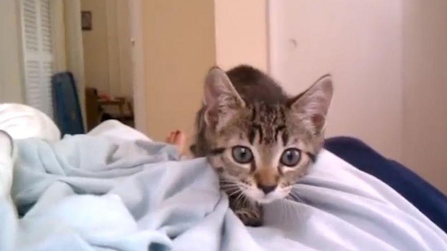 Η πιο... γλυκιά επίθεση σε κάμερα ήρθε από αυτή τη γάτα!