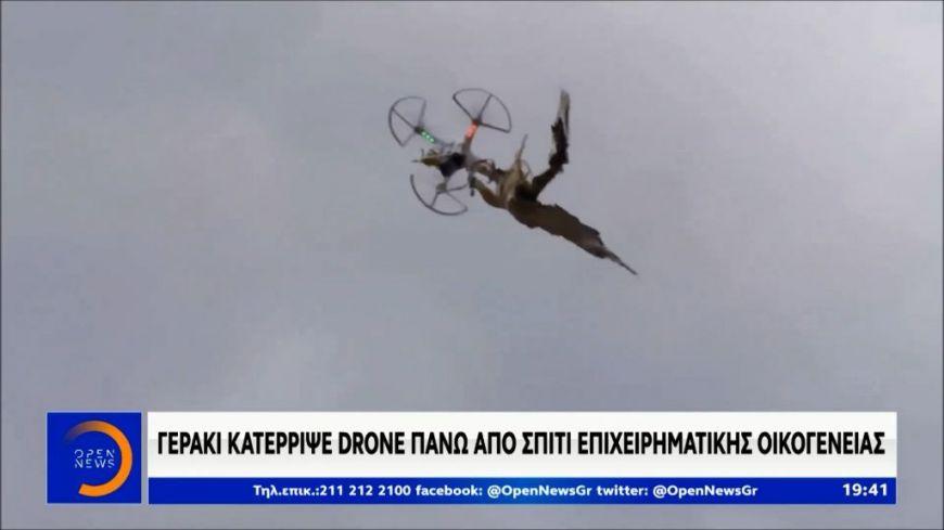 Drone Hunter: Το γεράκι, Ζήνα, κατέρριψε drone πάνω από σπίτι επιχειρηματικής οικογένειας - Τι δηλώνει ο εκπαιδευτής