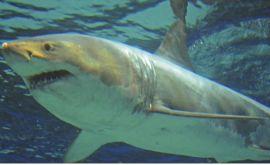 Καρχαρίας κατασπάραξε 17χρονο