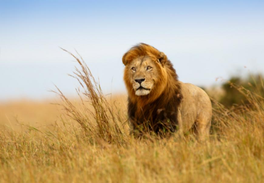 Όταν ήμουν μικρός με φώναζαν λιοντάρι!