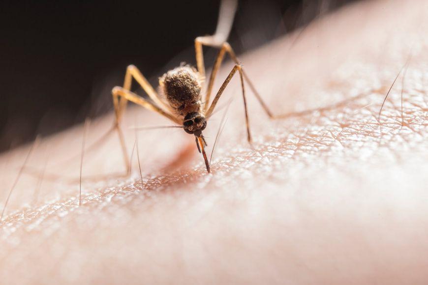 Προφυλαχθείτε από τα κουνούπια – Οδηγίες από τον ΕΟΔΥ
