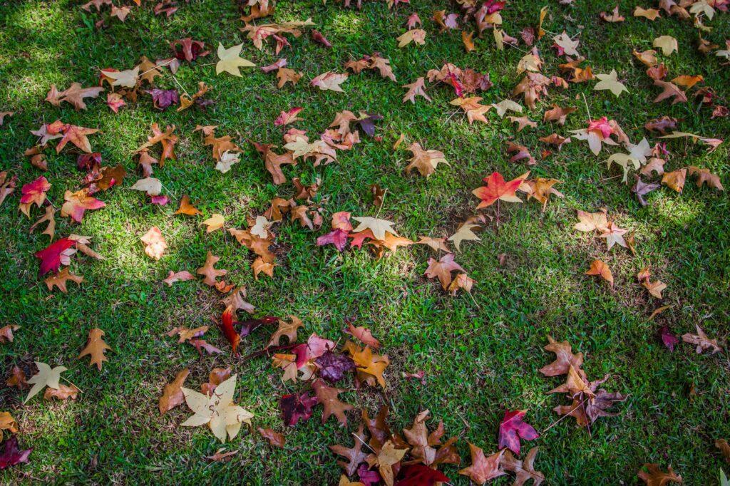 Αρχίζει την Τρίτη επίσημα το φθινόπωρο -Πότε θα έχουμε ίση μέρα, ίση νύχτα στην Αθήνα