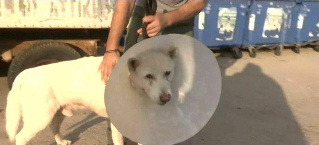 Νικητής ο Έκτορας, το σκυλάκι που είχε μαχαιρωθεί βάναυσα: Επιστρέφει στο σπίτι του