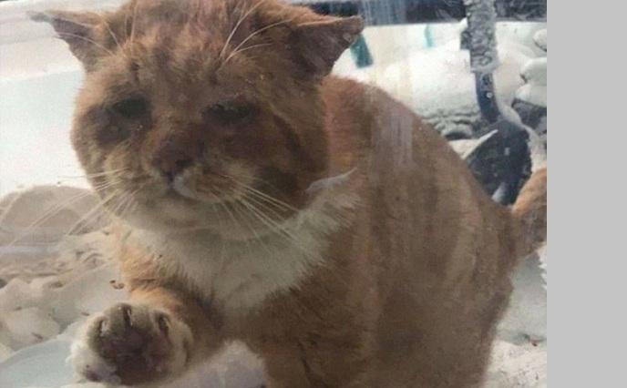 Ο μελαγχολικός γάτος που συγκίνησε το διαδίκτυο- Χτύπησε παράθυρο σπιτιού ζητώντας ζεστασιά (Photos)